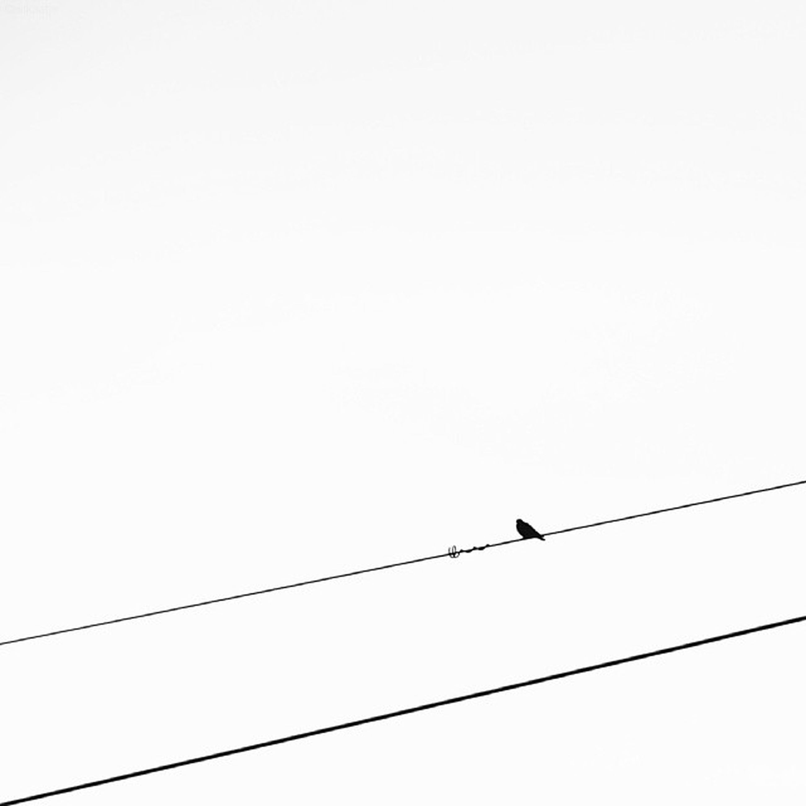 animal themes, bird, animals in the wild, wildlife, low angle view, clear sky, perching, copy space, one animal, flying, power line, cable, silhouette, avian, two animals, connection, nature, zoology, sky