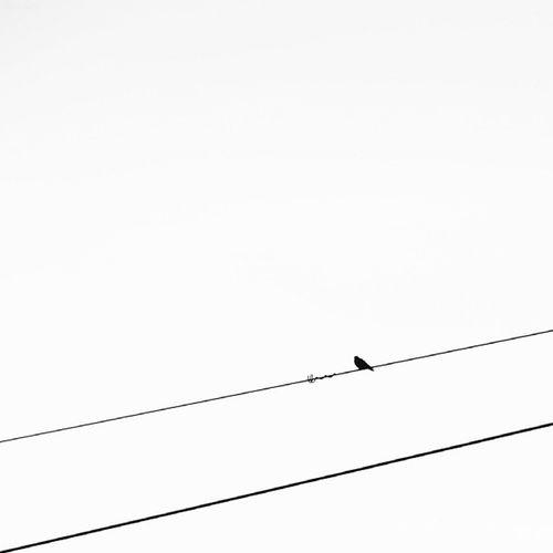 2 lines, 1 bird