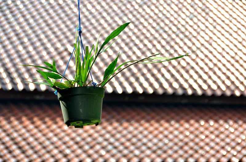 A hanging pot