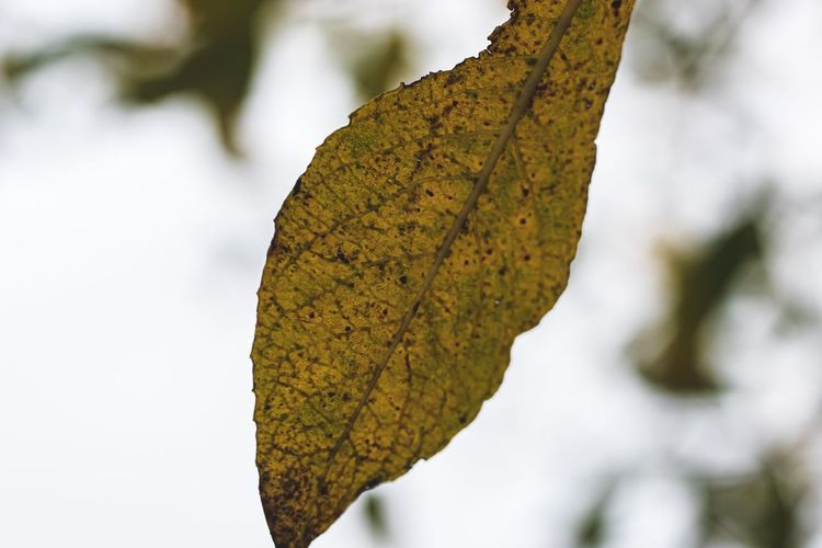 Close-up of autumnal leaf against blurred background