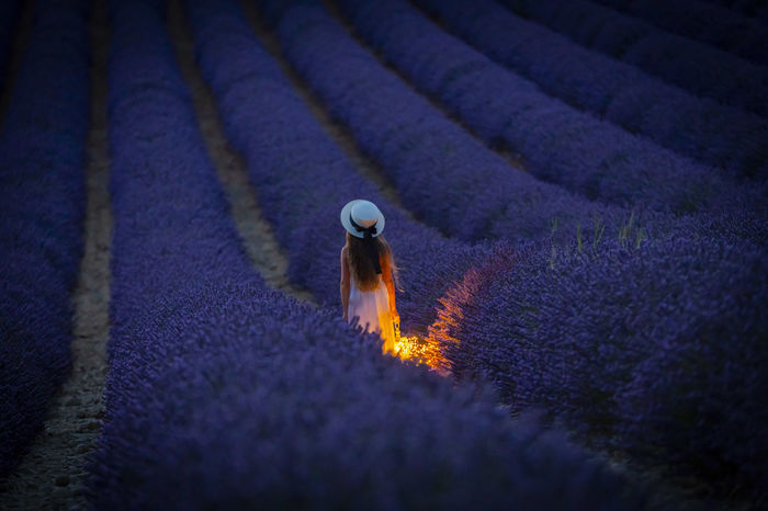 Agriculture Beauty In Nature Burning Crop  Day Environment Farm Field Growth High Angle View Land Landscape Lavander Lavander Flowers Motion Nature No People Outdoors Plant Purple Rural Scene