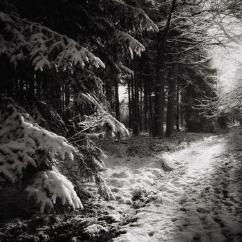 Snow ❄ Snow Covered Snowwhite Black And White B&w Nature Nature Photography Trees Wood Trees Covered With Snow Drenthe