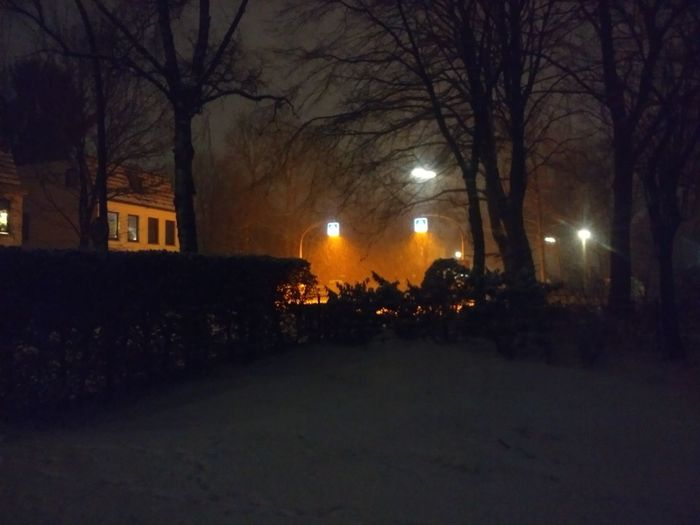Tree Night Illuminated Bare Tree Winter Branch No People Outdoors City