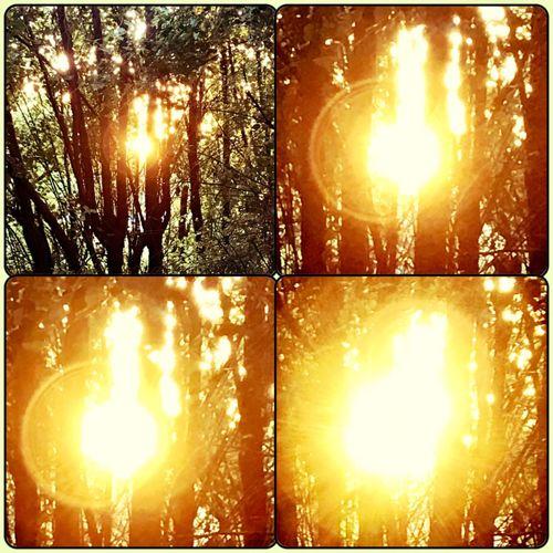 Sunset shots I got tonight. So beautiful ☀️🍃🌤 Glimmerofthesun Sunshiningthrough Sunsetthroughthetrees Theartofnature Sunset MyPhotography BeautifulSunset Momentstocatch Shinebrightlikeadiamond☀️💎 Inmyownbackyard SunsetCollage☀️ ☀️💛☀️
