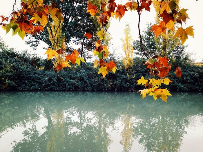 Reflection of trees in pond