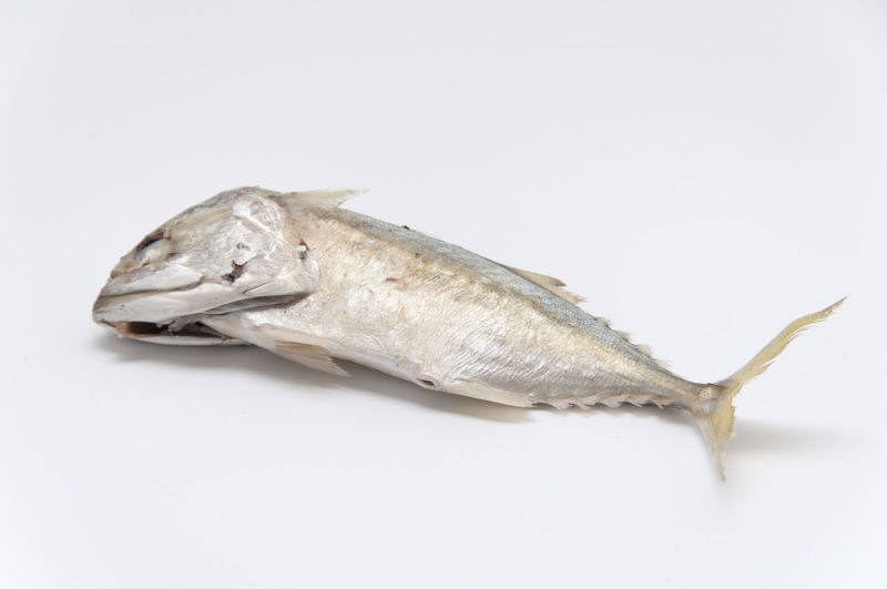 Close-up of dead mackerel on white background