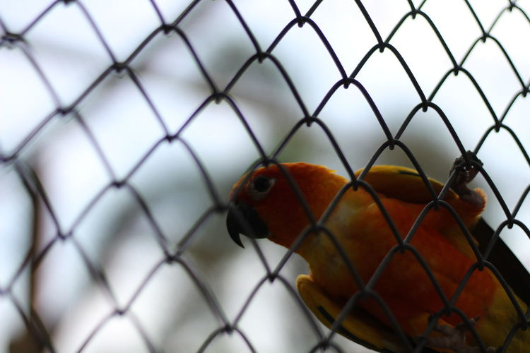 Close-up of bird in cage seen through chainlink fence