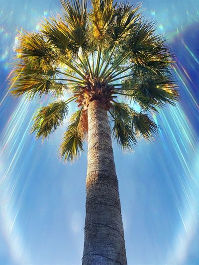 Palm Tree Magic