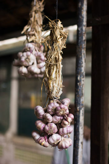 Close-up of garlic cloves against blurred background