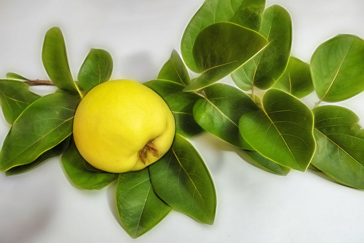 High angle view of fruits and leaves