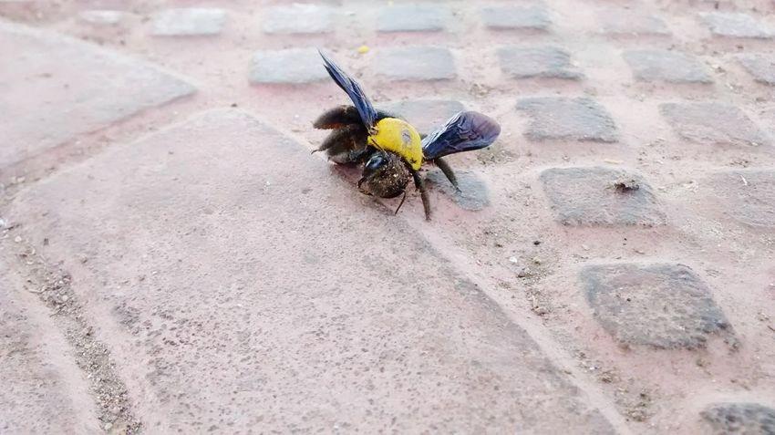 Another fatal crash Crash Creatures Big Bird, Small Bird Flies