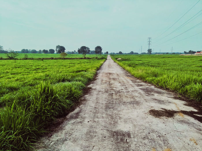 Vietnam Travels Quantranphotography Road Rural Scene Agriculture Cereal Plant Field Crop  Vegetable Diminishing Perspective Farm Sky Landscape Plantation Parallel Tire Track Plough Tea Crop Dirt Road