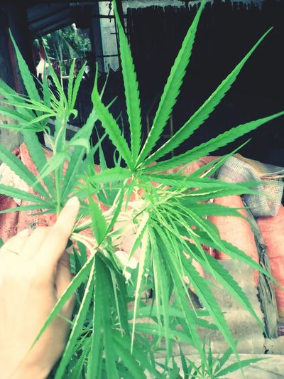 Wo want this baby plant??