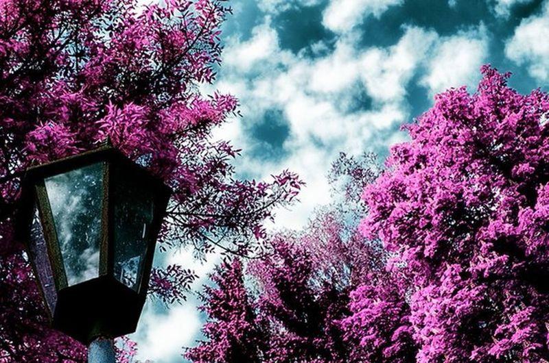 Natural Beauty Nature_arimeiff Beautiful