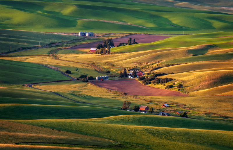 Palouse Farmland View From Steptoe Butte. You get a 360° view of the Palouse area of eastern Washington state from Steptoe Butte State Park. Morning light shapes the hills and valleys for a more textured look. Landscape Environment Scenics - Nature Beauty In Nature Tranquil Scene Land Tranquility Nature Green Color Non-urban Scene High Angle View Rural Scene Field Grass Day No People Idyllic Outdoors Rolling Landscape Steptoe Butte Steptoe Butte State Park Farm Farmland Morning Sunrise Dawn Washington Washington State State Park  Light Shadow Hills Valleys Palouse  Palouse Country Palouse Wheat Fields Agriculture Agricultural Field