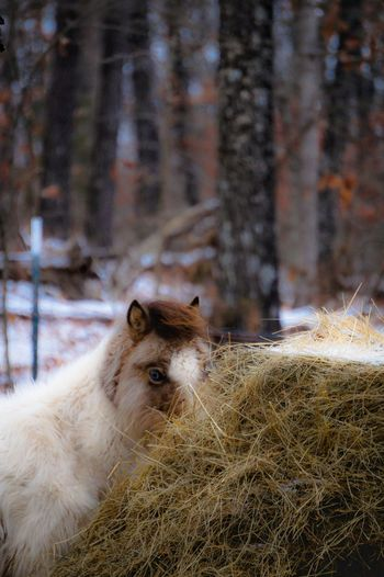 Portrait of horse on field during winter