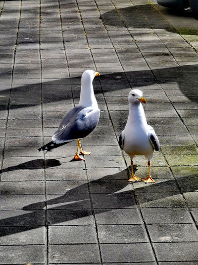 High angle view of seagulls on footpath