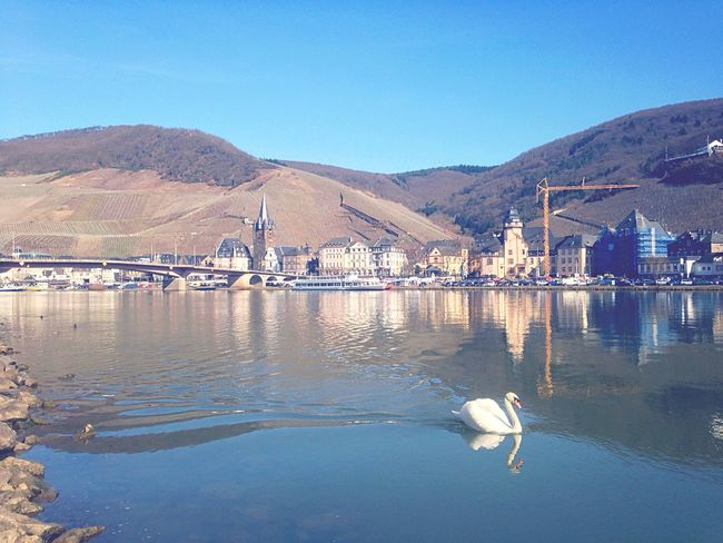 Swan Mosel Blue Sky Water Reflections