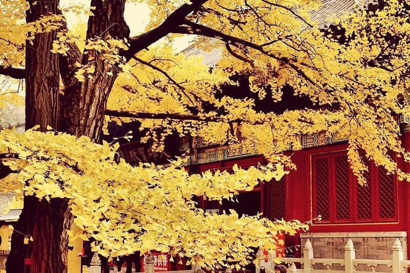 秋日红螺寺,极其美丽