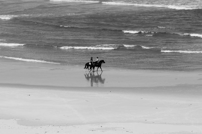 Side View Of Horse Riding On Beach