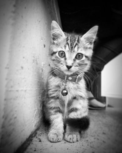 Kitten Feline Cats Of EyeEm