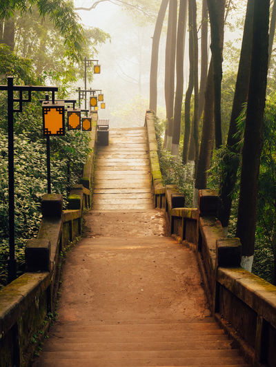 ASIA Beauty In Nature China Day Green Color Growth Nature No People Outdoors Path Temple The Way Forward Tranquil Scene Tree