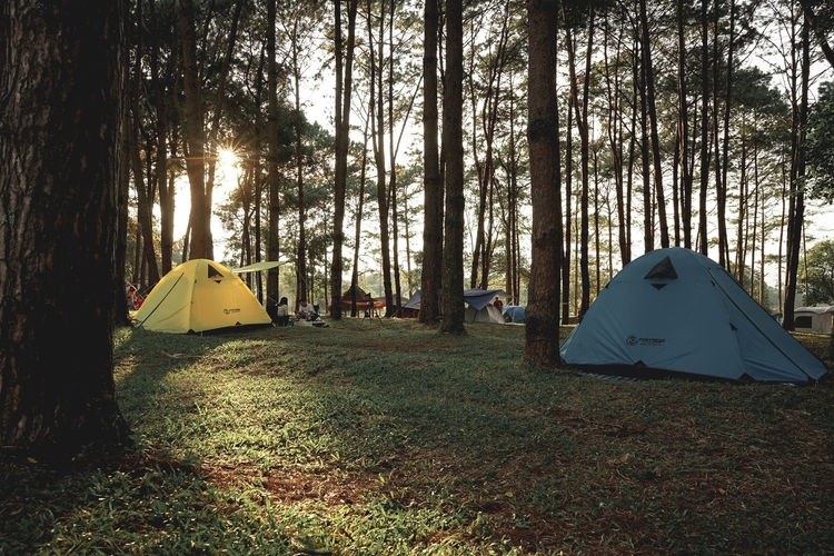 Tent on field by trees in forest