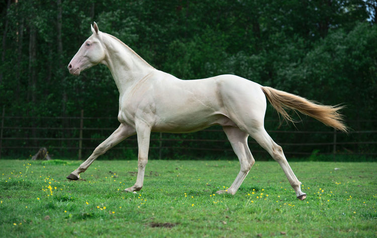 Animal Themes Day Domestic Animals Full Length Grass Horse Livestock Mammal Nature No People One Animal Outdoors Side View Tree