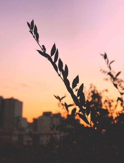 Sunset Sky Plant Silhouette Nature Beauty In Nature No People Growth Orange Color Leaf Outdoors Tranquility Animal Themes Sunlight Plant Part Focus On Foreground Tree Close-up Bird Branch