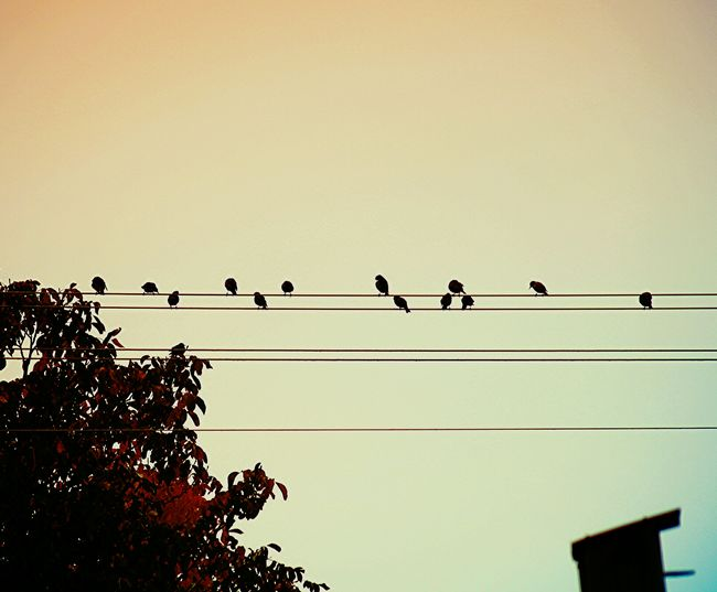 Low angle view of birds perching on power line against clear sky
