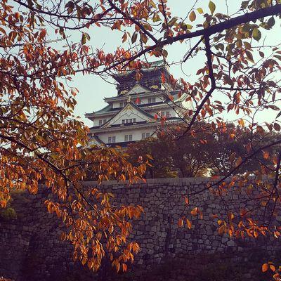 Osaka Castle Osaka Castle Park Autumn Leaves