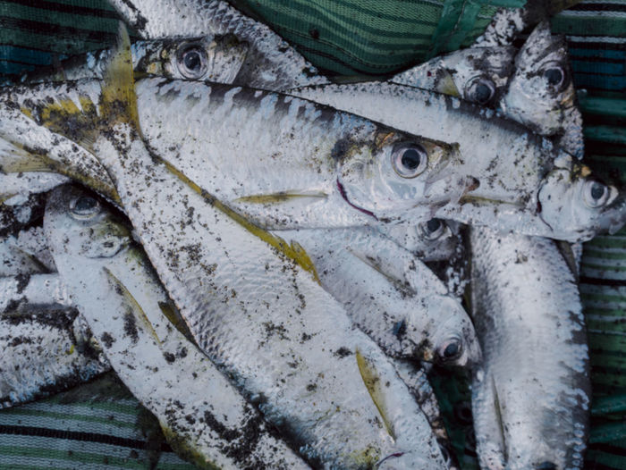 Close-up of fish on shore