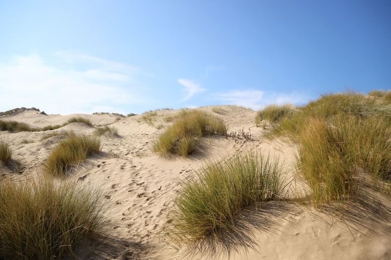 Formsby Beach Formsby Beach Liverpool Grass Plant Sky Land Growth Beauty In Nature Scenics - Nature Tranquility Nature Day Sand Cloud - Sky No People Landscape Tranquil Scene Beach Sand Dune Environment Marram Grass Non-urban Scene Outdoors Wind Arid Climate Timothy Grass