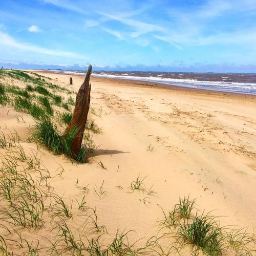 Hidden beach Seascape Beachphotography Sand Driftwood Landscape Photography IPhoneography Peaceful Dunes Coastline Outdoor Photography Coastalwonders Beach Cleethorpes Enjoying Life