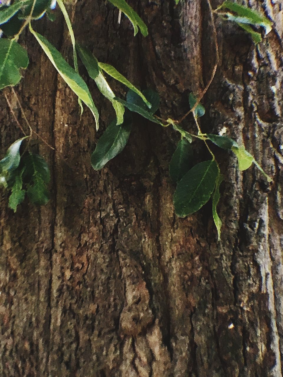 leaf, growth, green color, tree trunk, plant, nature, close-up, no people, day, tree, outdoors, freshness