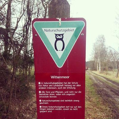 Wittenmoor bei Wietzendorf