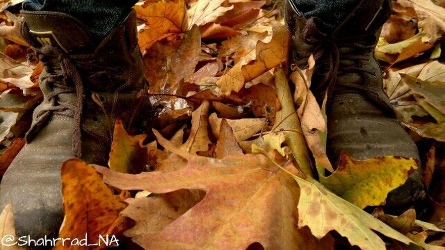 Autumn Photo Boots هنر Park Photography Photographer Art Beautiful Shahrrad_NA