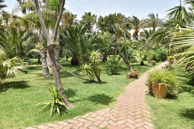Tree Growth Outdoors Green Color Nature Palm Tree No People Day Grass Sky Beauty In Nature Hurricane, Tarifa Travel Destinations Tranquility Sunny Beauty In Nature Tarifa Spain