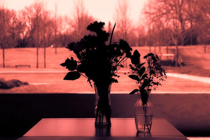 Lakewood Vase Flower Mausoleum Neon Noir No People Noir Scenics Silhouette Table Tranquility