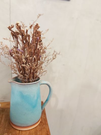 Close-up of plant on table against wall