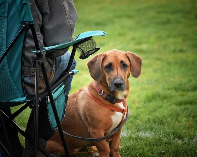 Dog Pets Grass Animal Themes One Animal Mammal Outdoors Domestic Animals Standing Pet Collar Day One Person Friendship Low Section Nature Human Hand One Man Only People Lifestyles Dogs Dogs Of EyeEm Human Body Part Grass Pet Photography  Real People