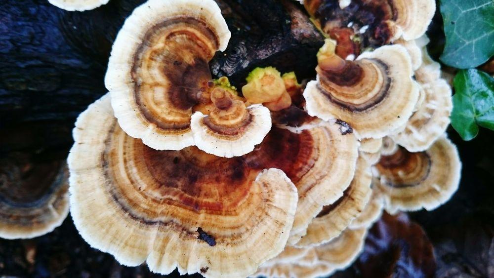 Fungi On Tree Fungi Growth Fungusphoto Fungi Close Up Fungi Detail Fungus Amongus Fungus 🍄 Fungus Patterns Toadstool 🍄 Trees And Nature Woodland Photography Woodland Undergrowth