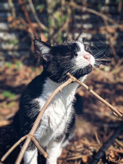 EyeEm Selects Leopard Pets Cheetah Portrait Close-up Big Cat Feline Domestic Cat Cat Whisker Kitten Animal Eye Stray Animal Lioness Animal Leg Carnivora