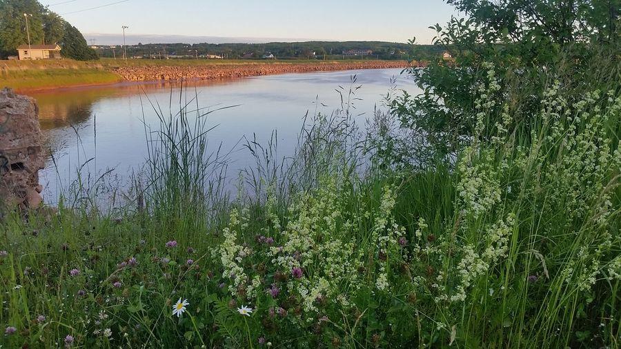Novascotia Beautiful Bayoffundy Tidalbore Home Landscape Photography Wildflowers Daisy Clover Ocean Summer