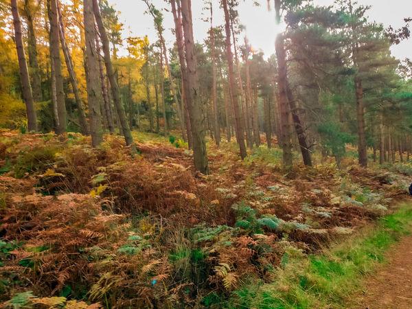 Tree Nature Growth Forest Autumn Grass Scenics Bracken Northumberland