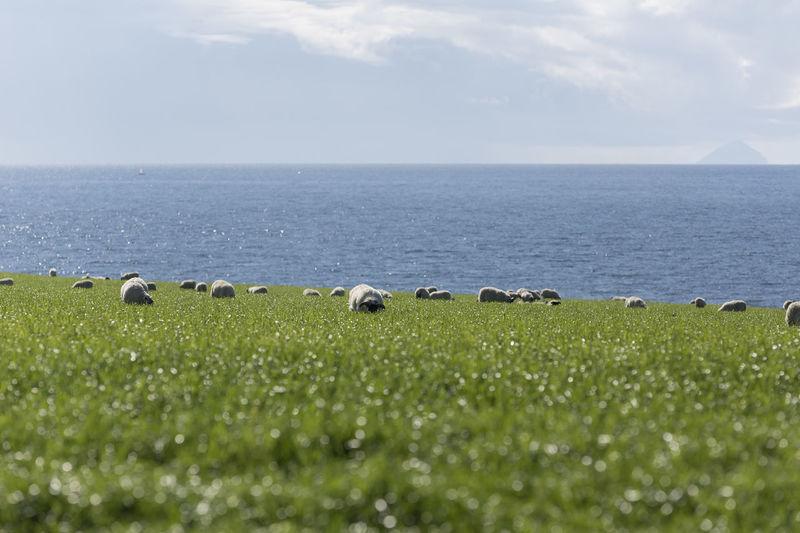 Landscape Landscape_Collection EyeEm Nature Lover Sheep Eyeem Scotland