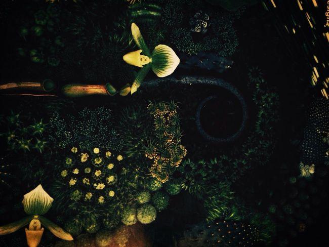 Green Art Flowers Nature