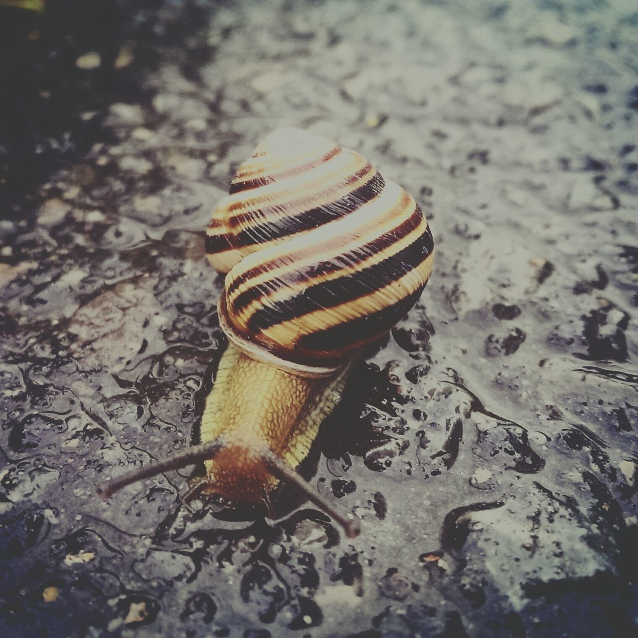 one animal, animal shell, snail, close-up, animal themes, no people, nature, animals in the wild, gastropod, spiral, day, outdoors, fragility