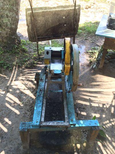 Day Old Sugarcane Sugarcanejuice Wood