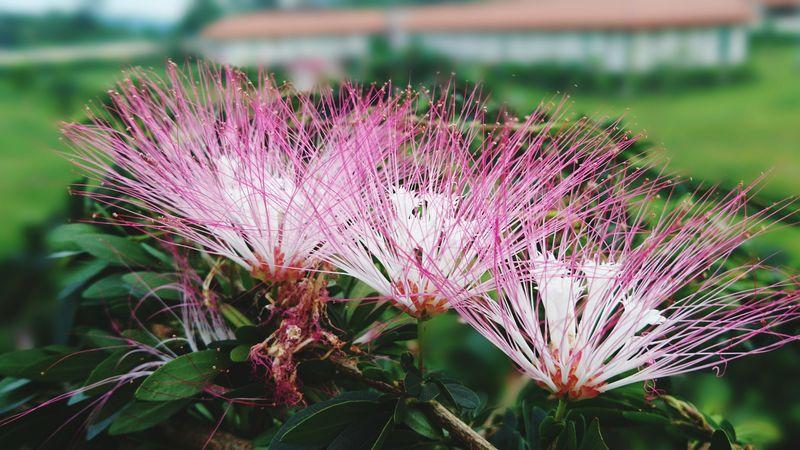 Fondo desenfado Flower Purple Nature Plant Beauty In Nature Fragility Desenfocado Close-up Construccion Worker Flowerphotography Unfocused